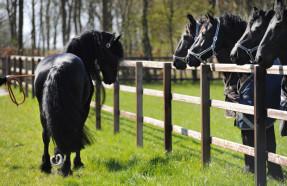 Zeelen's horses